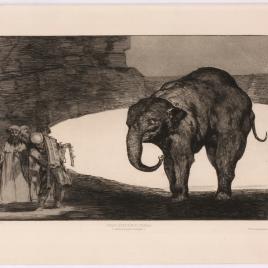 Disparate de bestia