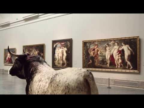 Historias Naturales: El toro de Veragua