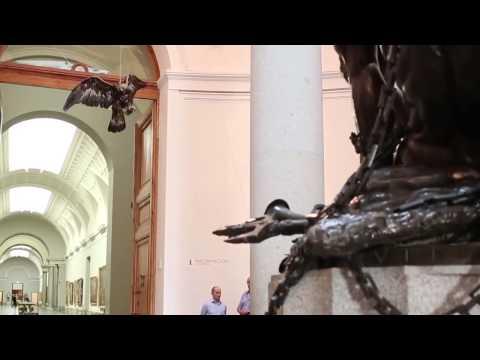 Historias Naturales: El furor de las águilas